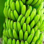 Bananen Weltladen Hemmingen